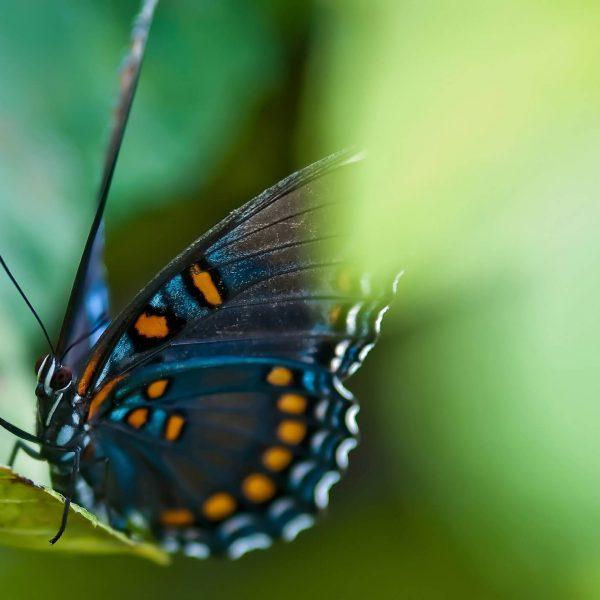 l'effleurage tel un papillon