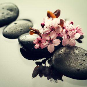 les fleurs âges - massage- domicile locmariaquer